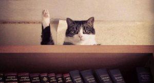 poze cu pisici