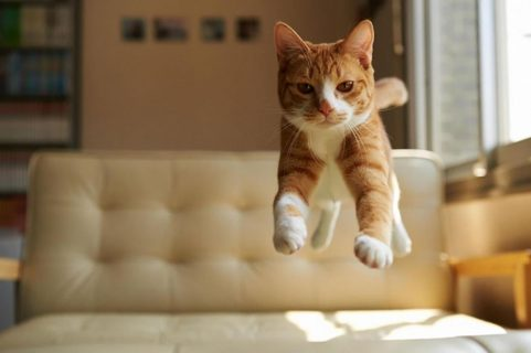 poza pisica zburatoare